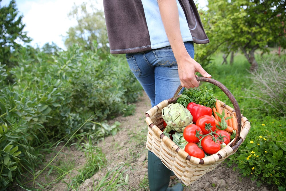 producteurs fermiers et artisans
